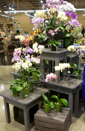 Floral, flower retail store fixtures, merchandising displays